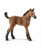 Quarter horse - foal