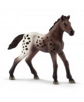 Appaloosa - foal