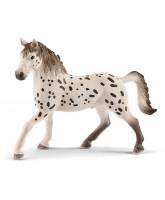 Knabstrupper - stallion