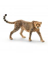 Cheetah - female