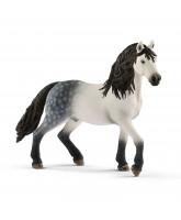 Andalusian - stallion