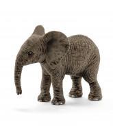 African elephant - calf