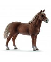 Morgan horse - stallion